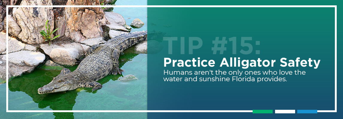Tip #15: Practice Alligator Safety. Humans aren't the only ones who love the water and sunshine Florida provides.
