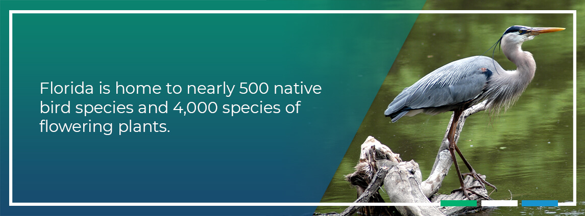 Florida is home to nearly 500 native bird species and 4,000 species of flowering plants